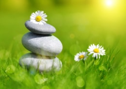 Marianne Krug - Ärztin - Hormoncoach - Seminare - Frankfurt - Hormone - Therapie - Coaching - Green grass with stones and daisies